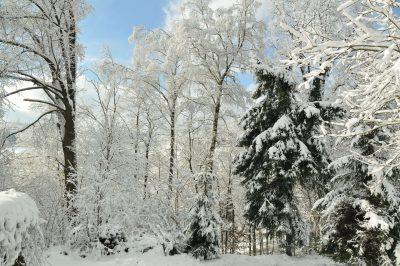 Promyk w zimie 2