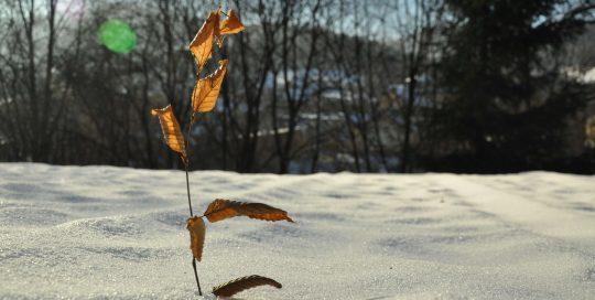 Promyk w zimie 7
